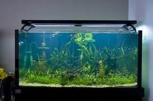 Яркая аквариумная рыбка неон