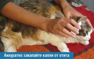 Как вылечить кошку от отита