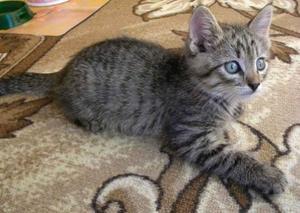 Выбор имени для серого котенка