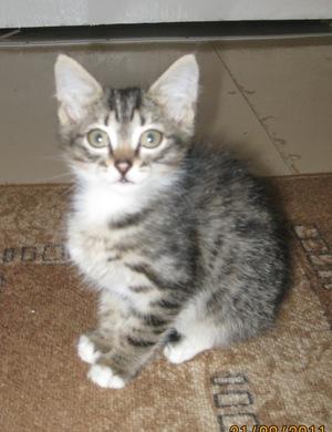 Популярные клички котов