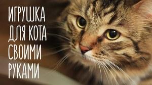Игрушки для кошки - что можно придумать для животного