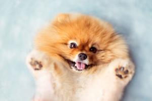 Перед покупкой понаблюдайте за щенками и выбирайте себе наиболее понравившегося