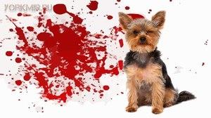 Больная собака дома