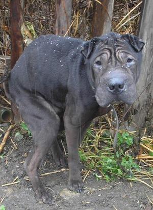 Понос у домашней собаки