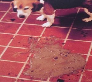 Диарея у домашней собаки