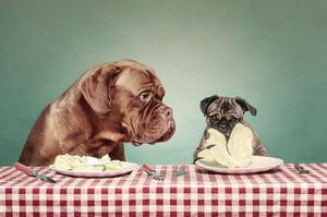 Диета для собаки при панкреатите