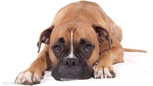 Симптомы развития панкреатита у собаки