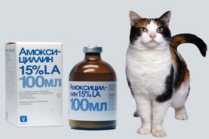 Особенности применения Амоксициллина для лечения кошек