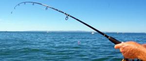 Что за рыба пелядь и в чем ее ценность?