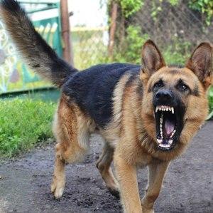 Характеристика собаки