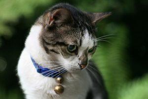 у домашней кошки появились