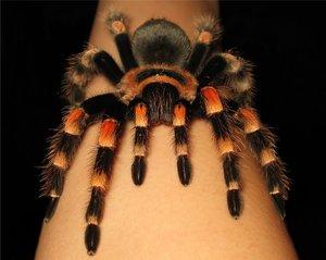 Популярные виды пауков