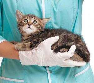 Пирантел для кошек цена