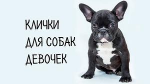 Клички для собак-девочек самых маленьких пород