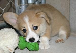 Клички собак-девочек маленьких пород