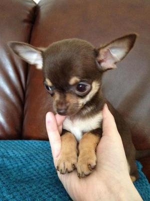 Клички для маленьких собачек-девочек