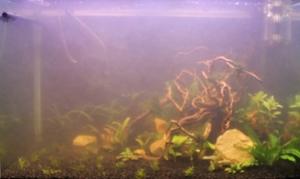 Помутнение воды в аквариуме