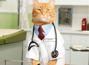 Лечение печеночной недостаточности у кошек