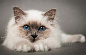 Лечение котов