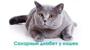 Почему кошки болеют диабетом
