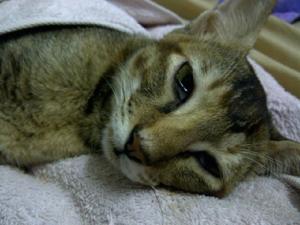 Существует несколько способов снизить температуру у животного