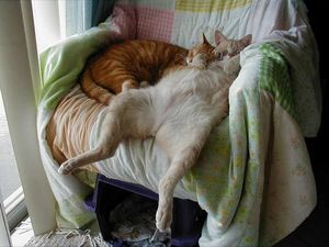 Два кота спят на стуле
