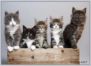 Топ самых ласковых кошек