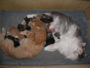 Что делать, если кошка не может родить сама