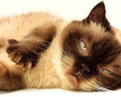 Какая переноска для кошек лучше: выбираем лучший аксессуар для своего питомца