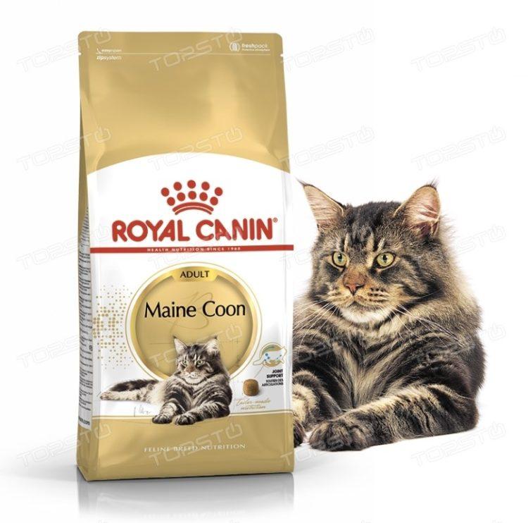 Рейтинг лучших кормов для котят породы мейн кун