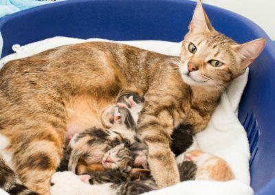 Чем кормить беременную кошку: обзор особенностей возраста, пищеварения и предпочтений разных пород, советы и рекомендации ветеринаров, отзывы кошатников