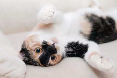 Корм для старых кошек, старше 7 лет: подбор оптимальных вариантов с учетом особенностей возраста и пищеварения