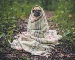 Чем удалить запах и пятна от собак: обзор самых действенных средств с ценами и отзывами потребителей